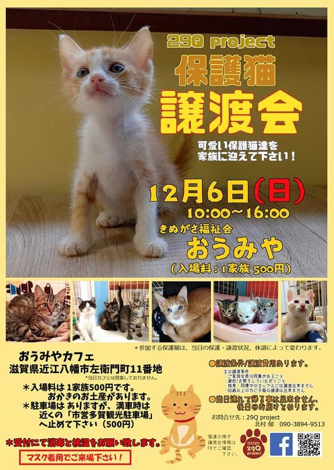 直近の保護猫譲渡会チラシです。
